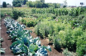 picture of community garden
