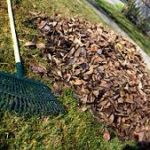 raking leaves in Fond du Lac County