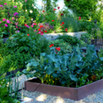 picture of a flowerbed
