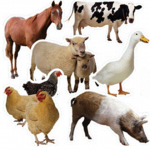 photo of farm animals