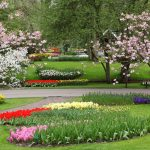 flower garden with trees