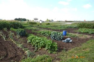 A view of the community gardens on Pioneer Road & Grove Street in Fond du Lac.