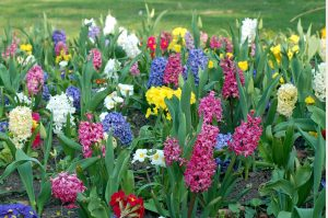 garden of multi-colored flowers