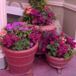 3 flower pots mixed an arrangement of pink flowers