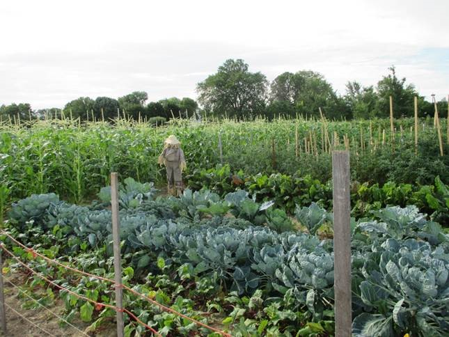 photo of Fond du Lac County Community Garden in 2015 - scarecrow is in the garden