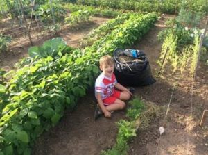 Boy with red and white shirt helping in community garden.
