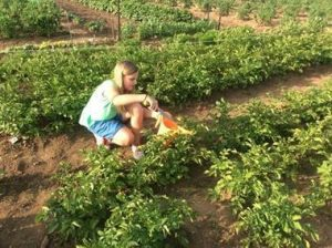 Girl with blue shorts and blonde hair waters plants.
